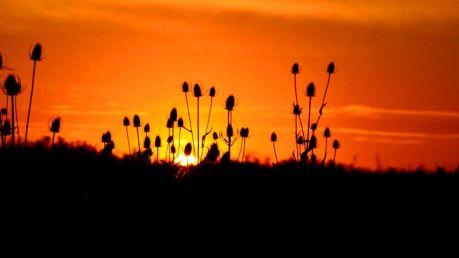 sunset-idaho_980x551