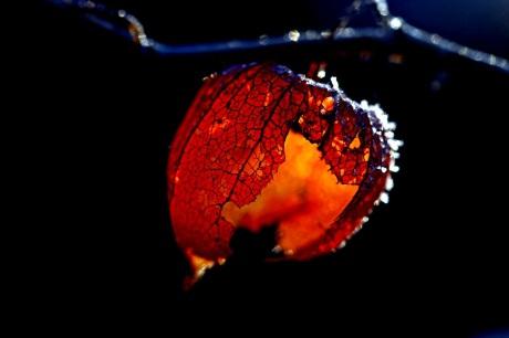 red_lantern_by_augenweide-d5rl9ws