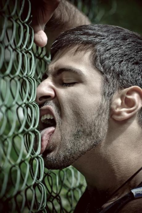 fence licking